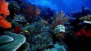 Taman Laut Bunaken (Sulawesi Utara)